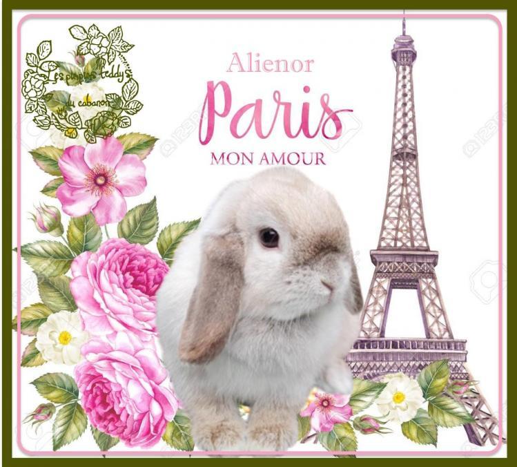 78847107 la tour eiffel avec des fleurs de printemps est isole e sur le fond blanc carte me moire et signe j ado