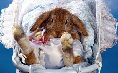animals-happy-easter-pictures.jpg