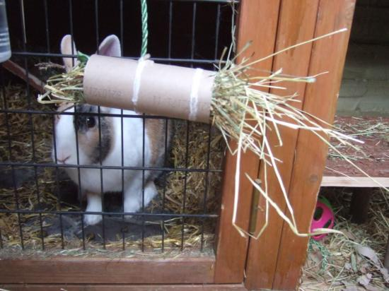 Cardboard roll rabbit hay toy