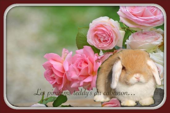 Details bouquet roses e1496760583831