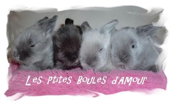 LES PTITES BOULES D'AMOUR