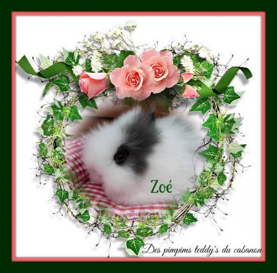 Pixiz 543195079ac0c