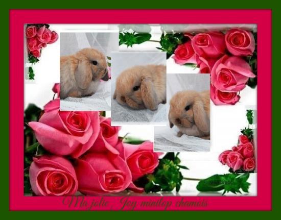 Pixiz 544fa32f0756b