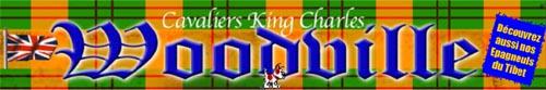 WOODVILLE CAVALIER KING CHARLES DANS LES YVELINES